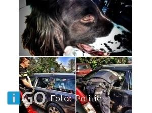 Politie bevrijdt hond in hete afgesloten auto Ouddorp
