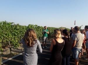 Rondleiding en wijnproeverij wijnhoeve 'de Kleine Schorre'
