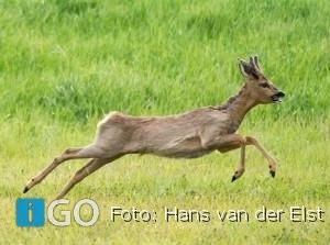 Natuur Goeree-Overflakkee bij RTV Rijnmond op 15 en 22 augustus