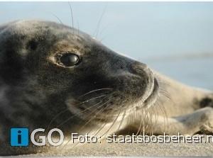 Start Robbentochten op Grevelingenmeer