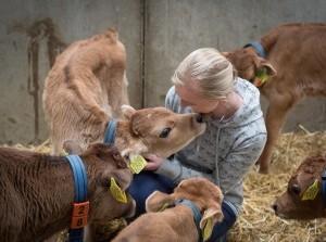Rondleiding koeien en kalfjes knuffelen