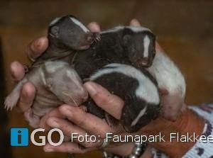Bijzondere dieren van dichtbij Faunapark Flakkee in Nieuwe-Tonge