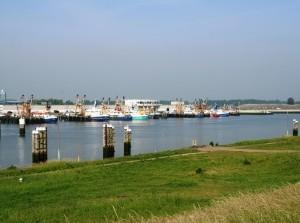 Rondleiding visafslag en Stellendamse haven