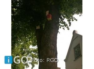 Kleurrijke vogelhuisjes ophangen op mezen Goeree-Overflakkee te helpen