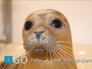 Het Zomerprogramma zeehondenopvang A Seal Stellendam