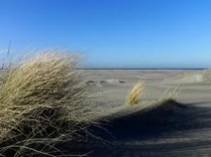 Nieuwe natuurserie 'Best of Nature' belicht kustlijn Goeree-Overflakkee