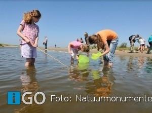 Speuren naar zee- en stranddieren aan de Brouwersdam