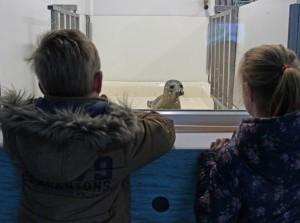 Tentoonstelling duurzame visserij bij A seal