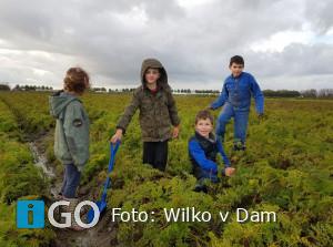 Geslaagde oproep van duurzame boer: samen winterwortelen rooien