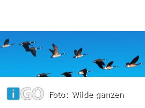 PCOB ontmoetingsmiddag: Wilde Ganzen