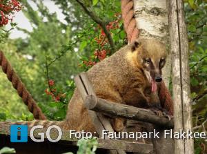 Dierentuin Faunapark Flakkee in top 10 'Leukste dagje uit 2020'