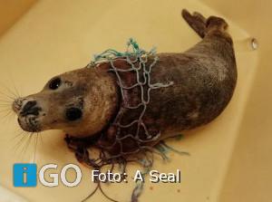 Zeehond verlost van verstrikking in net door A Seal