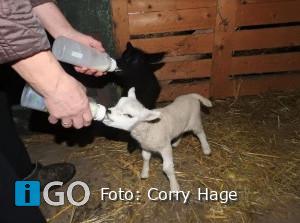 Natuurfotograaf Corry Hage laat anderen graag meegenieten