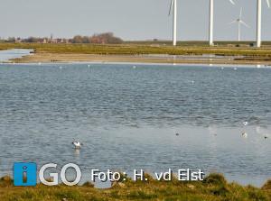 Hans van der Elst fotografeert de Kluut bij Herkingen