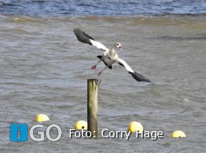 Start onderzoek naar verzanding kustgebied monding Haringvliet