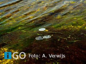 Annemarie Verwijs maakt schitterende foto's Grevelingen