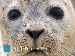 A Seal Stellendam heropent met nieuwe tentoonstelling
