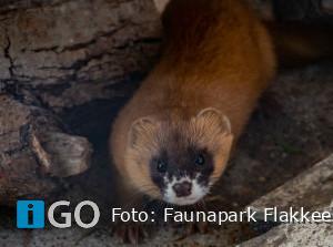 Met de trein aapjes kijken op Faunapark Flakkee Nieuwe-Tonge