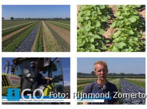 [video] Cornelis Mosselman Ooltgensplaat wil duurzaamste bedrijf Nederland worden