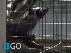 Video: Samen maken we Goeree-Overflakkee en helpen we ondernemers!