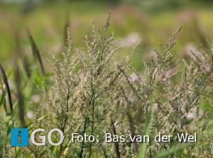 Workshop (volw.) Natuurfotografie De Kwade Hoek