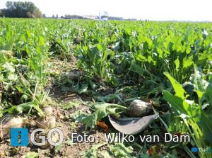 Sportvliegtuigje maakt noodlanding in suikerbietenveld Den Bommel