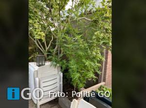 Politie houdt actie met Stedin op Goeree-Overflakkee