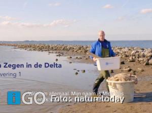 Video onderzoek 'kraamkamerfunctie' Zuid-Hollandse Delta