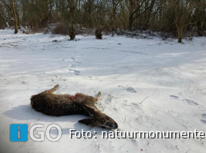 Boswachters bezorgd om drukte en loslopende honden