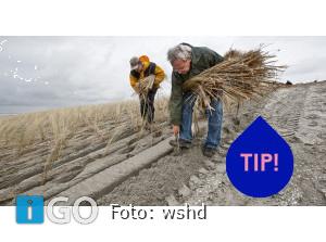 Samen letten op begroeide duinen Goeree-Overflakkee