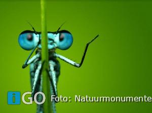 Zorgen om verdwijnen leefgebied insecten eiland Goeree-Overflakkee