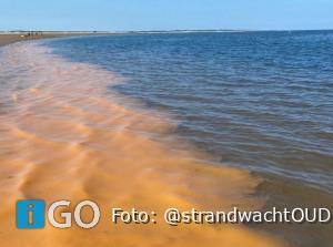Reddingsbrigade waarschuwt: Zeevonk kust Oudddorp Goeree-Overflakkee