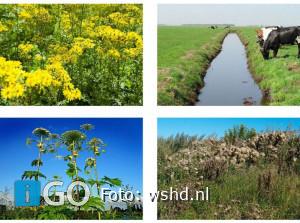 Waterschap praat je bij over 'lastige planten' - overlast of schade