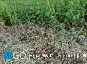 Bermen maaien en de wet - Water Natuurlijk Hollandse Delta