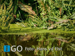 Genieten van de natuur op eiland Goeree-Overflakkee