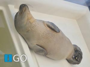 Partij voor de Dieren op bezoek bij zeehondenopvang Stellendam