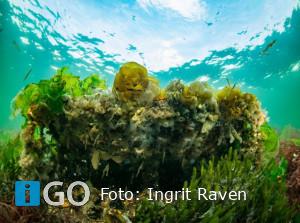 Kinderen openen 's werelds eerste Tiny Sea Forest in Grevelingen