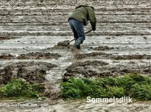 Boeren Zuid-Hollandhebben oplossingen gevolgen extreem weer