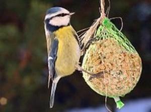 Vette vogeldag op De Klepperstee