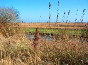 Open middag in uniek deltanatuurgebied Scheelhoek Stellendam