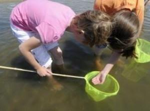 Strand- & zeedieren zoeken op Ouddorp Duin