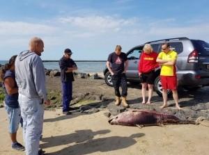 Tonijnachtige vis bijna 200 kg aangespoeld Brouwersdam Ouddorp