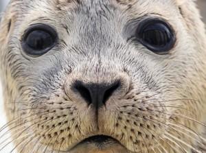 Goeree-Overflakkee in top 100 van duurzame toeristische bestemmingen