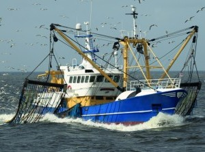 Nederlandse Vissersbond: 'Innovatieve pulsvisserij heeft toekomst'