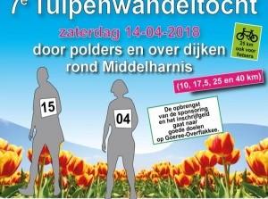7e Tulpenwandeltocht met prachtige routes op Goeree-Overflakkee