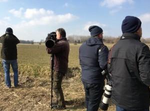 [video] Siberische wind 'blaast' zeldzame vogel naar Goeree-Overflakkee