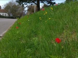 Genieten van de lente op Goeree-Overflakkee