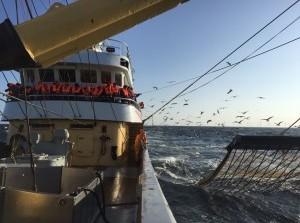 Pulsvisserij weer op agenda visserijcommissie Europarlement