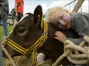 Fokveedag Hellevoetsluis: de mooiste koeien en sterkste mannen