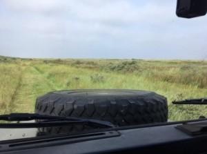 Go Wild in de duinen van Goeree